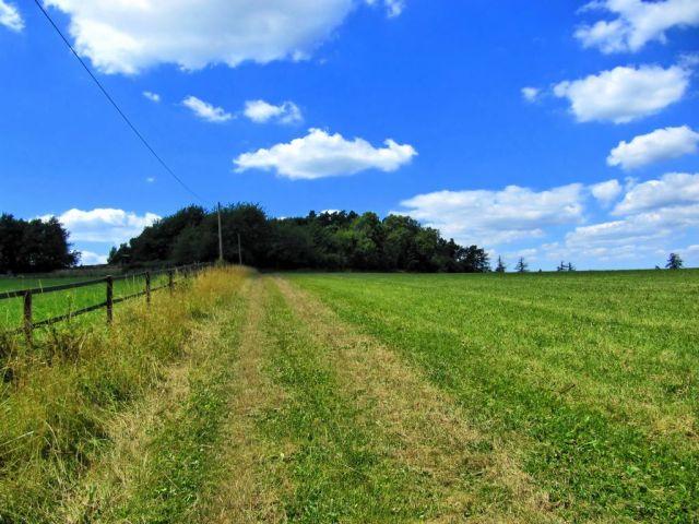 Weg über die Wiese