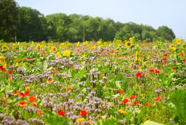 3021767-flowering-meadow-near-forest-edge-with-lots-of-various-herbs-and-flowers-in-sunny-ambiance