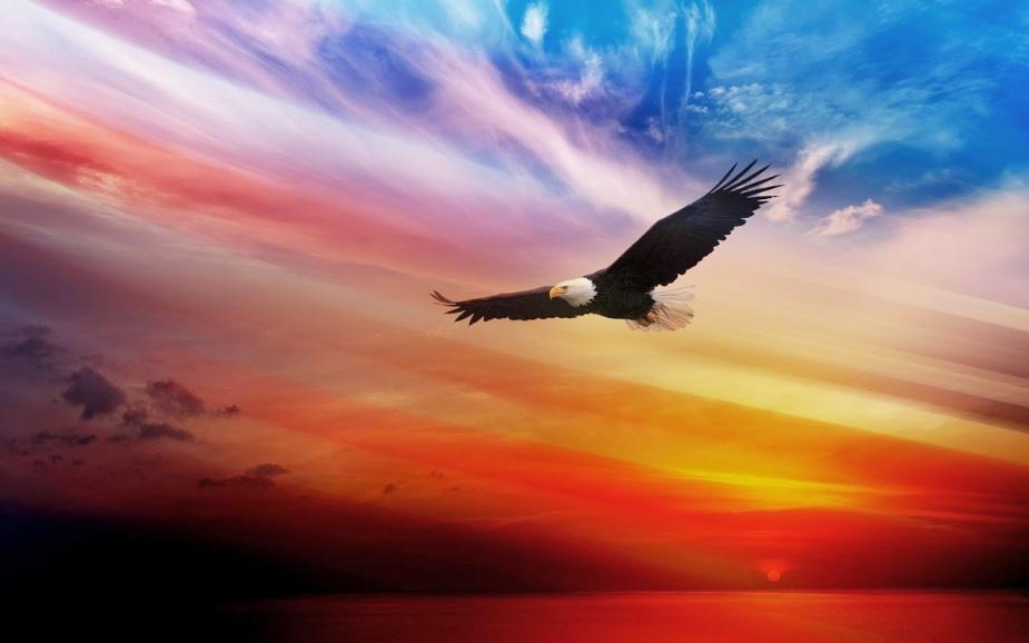 Bildergebnis für Bilder für fliegenden Adler